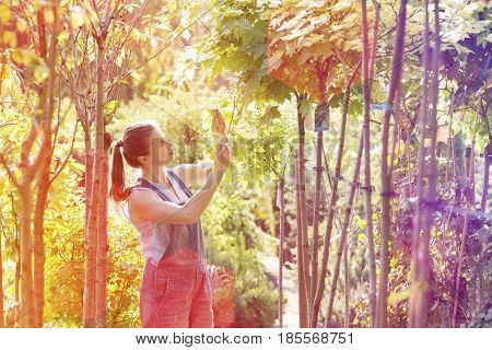Woman examining leaves at garden center