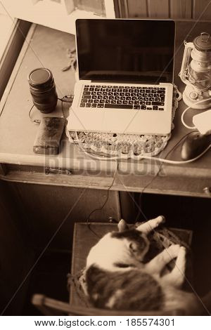Sepia Monochrome Still Life With Laptop, Sense, Oil Lamp, Teacup And Cat