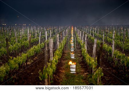 The Bordeaux Vineyards Affected By A Devastating Frost