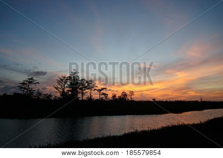 Sunset Silhouette In The Cypress Swamp