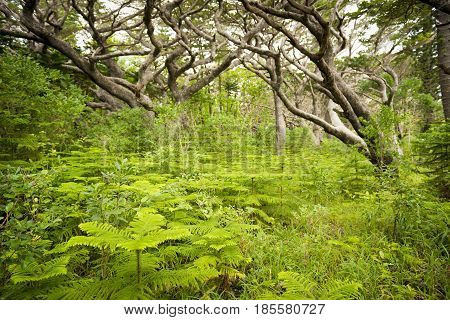 Forest South Pacific
