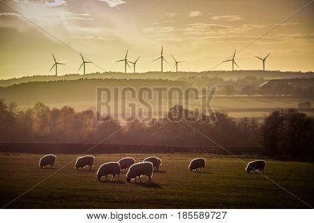 Wind Farm Turbines Horizon Backlit Sheep at Sunset