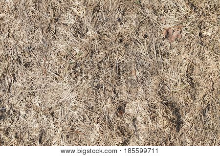 Dry Grass, Top View, Flat Background Photo