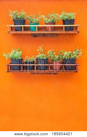 Orange wall with plants on shelves