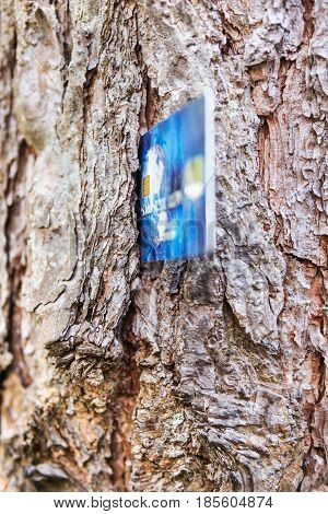 Conceptual photo - plastic bank card sticks out in the bark of a tree
