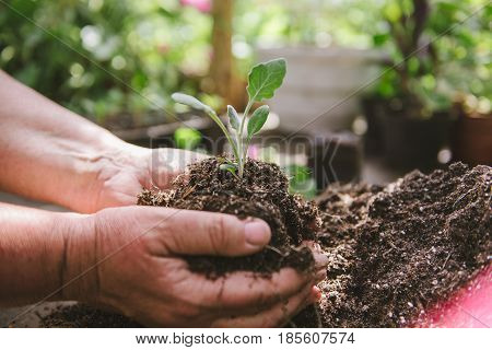florist man holding soil in his hands. A sprout in the hands of a flower grower. Preparation of plants or flowers for transplantation, in horticulture, in house greenhouses.