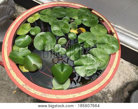 Lotus leaf float on water pot in tranquil garden with sun light reflection Drops of water on green lotus leaf green focus-on-foreground with blur wall background