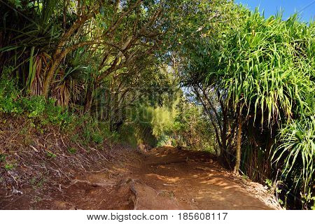 Beautiful Pololu Loop Trail Located Near Kapaau, Hawaii, That Features Beautiful Wild Flowers And St