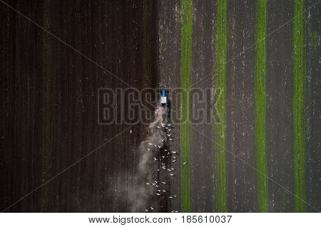 The blue tractor plows the field against the backdrop of the black earth, and behind it birds fly and collect food. Aeril view. Agricultural machinery works in the field of spring planting. Plowing from above. Top view