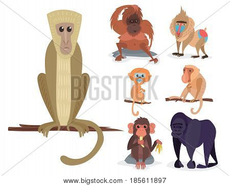 Different breads monkey character animal wild vector set illustration. Macaque nature primate cartoon wild zoo cheerful gorilla ape chimpanzee wildlife jungle animal.