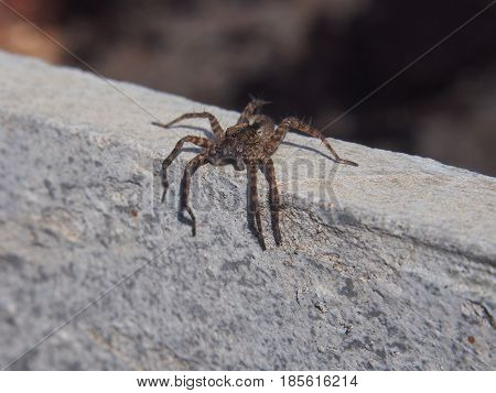 Small spider sitting on a rock. Macro. Arthropods.