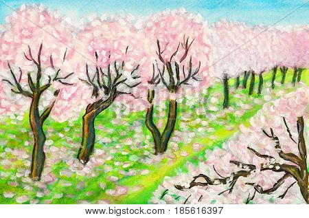 Hand painted picture, watercolours, spring garden with pink cherry trees in blossom.