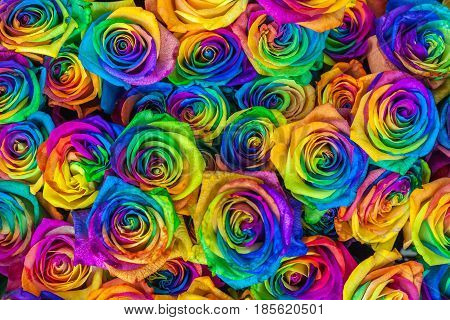 Fresh beautiful vibrant multicolor roses flowers for floral background. Rainbow colored unique and special roses. Top view, close up. Bangkok flower market, Thailand