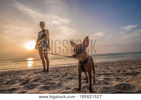 Woman standing on the beach with mini pinscher over beautiful sea and sunset sky background