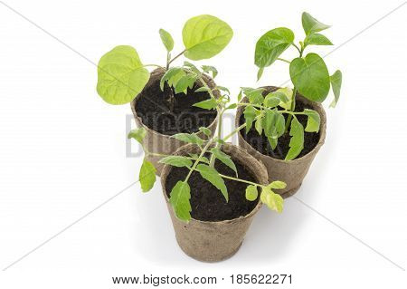 Potted seedlings growing in biodegradable peat moss pots on white background