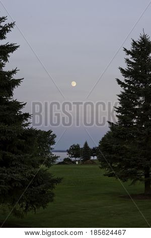 Vertical of the early evening moon over water between fir trees in the foreground near Cornwall, Ontario in early August.
