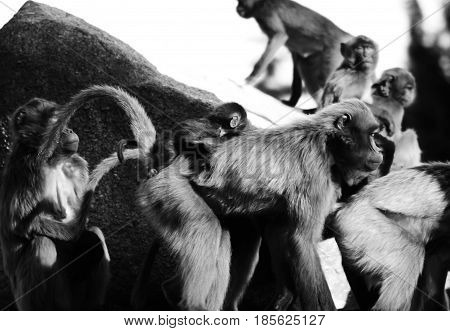 Monkeys,baboons a lot of families animal nature
