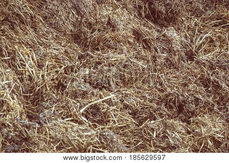 Close up of pile of manure in the countryside. Detail of heap of dung in field on the farm yard. Village background. Traditional rural scene. Slovak landscape