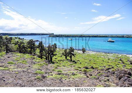 South Plaza Island of the Galapagos Islands in Ecuador