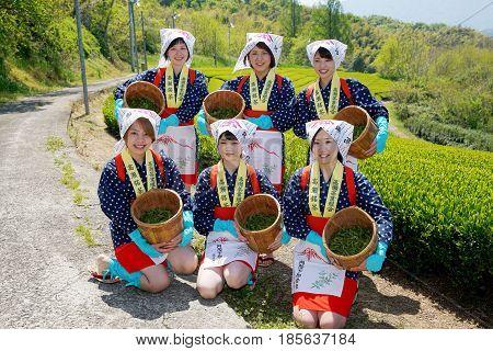 MITOYO, KAGAWA, JAPAN - APRIL 24, 2017: Young japanese women with traditional clothing kimono harvesting green tea leaves on farmland of tea plantation