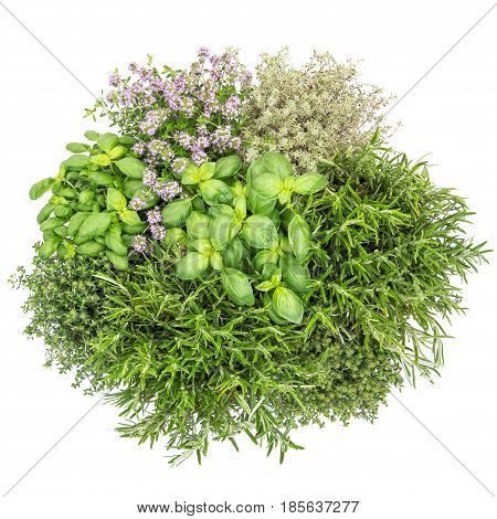 Fresh herbs isolated on white background. Food ingredients. Basil rosemary thyme savory