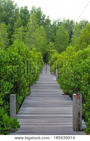 Wooden bridge at Tung Prong ThongGolden Mangrove FieldPra Sae Rayong Thailand.