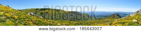 Panorama of rocks and blooming brooms in the moor in the Cevennes mountains near Trenze Mont Lozere France