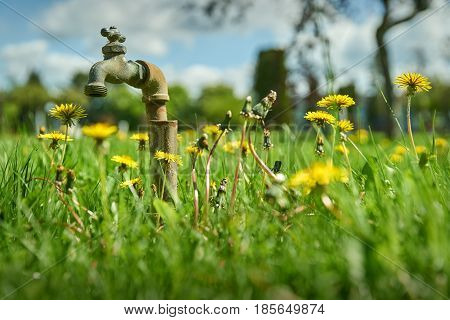 Garden Lawn Water Faucet. Low angle of a faucet in the middle of grass and dandelions.
