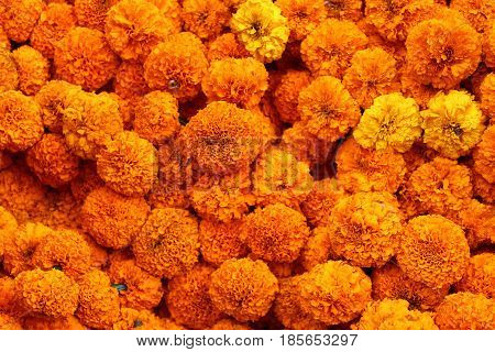 A collection of beautiful orange marigold flowers
