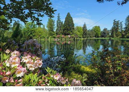 By the lake at Crystal Springs Rhododendron Garden in Portland Oregon on a beautiful sunny day