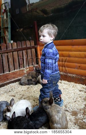 Boy and rabbits on the farm indoor