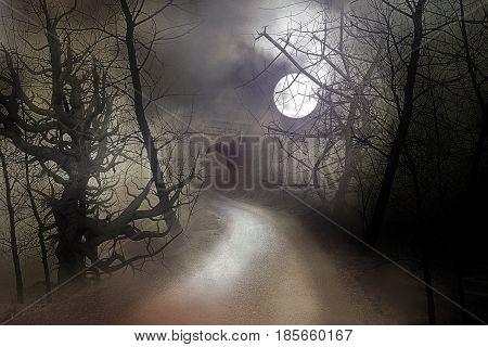 Road leading through dark creepy trees in moon-lit night