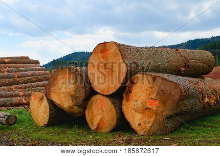 The Heap Of Logs. Logging Station, Texture Background