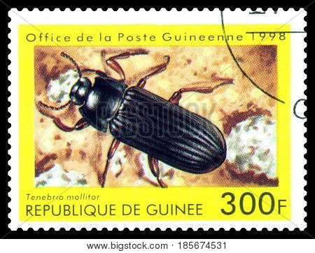 STAVROPOL RUSSIA - April 30 2017: a stamp printed in Guinea (Republique de Guinee) shows Beetle Tenebria mollitor series beetle circa 1998