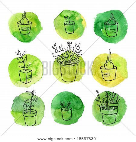vector gardening doodle set, home and garden plants, hand drawn isolated design hortyculture elements at green watercolor background