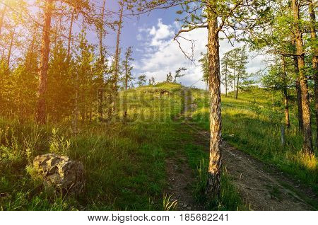 Summer mountain forest -hillside with the forest path leading to the top of Sugomak mountain in Southern Urals. Summer sunset mountain landscape. Mountain summer forest at sunset. Summer view of forest trees at the mountain. Forest summer mountain nature