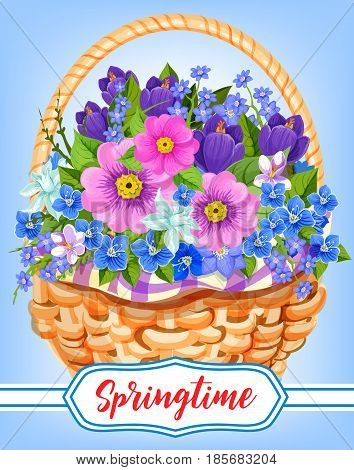 Springtime greeting card of flowers bouquet in wicker basket. Vector bunch of crocuses or violas and garden lily of valley, tulip or daffodil, daisy and narcissus petals for spring holiday