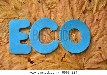 WORD ECO ON A  ABSTRACT COLO0RFUL BACKGROUNBD