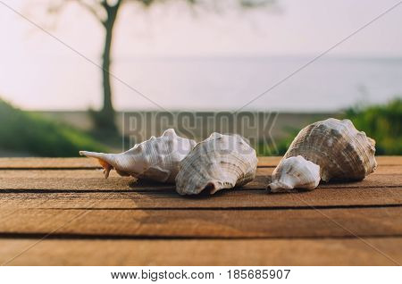 Beautiful Shells On The Sea Background