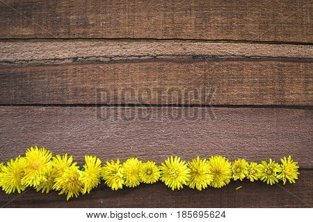 Beautiful Dandelions And Wood Background