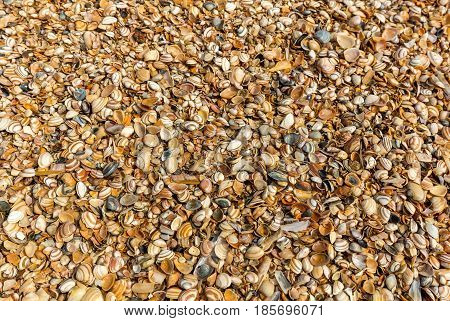 Sea shells on sand Summer Vacation Tropical Concept