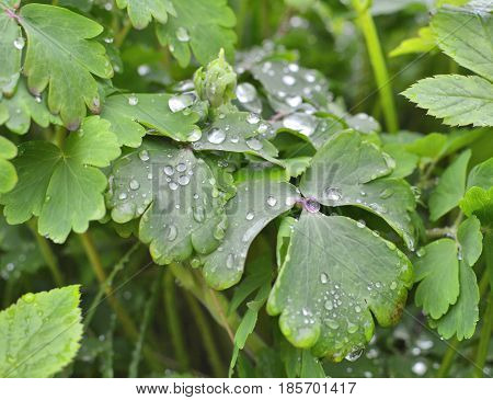 Green Leaves With Droplets