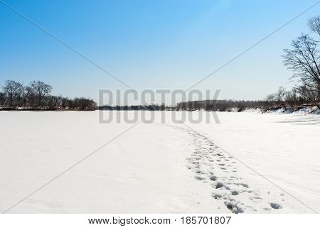 River in winter. Footprints in the snow.