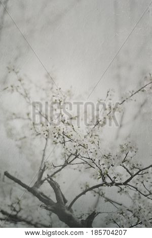 Beautiful spring blossom artwork with canvas texture.