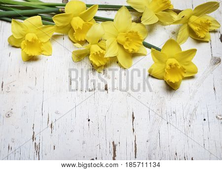 Beautiful fresh narcissus on white wooden table
