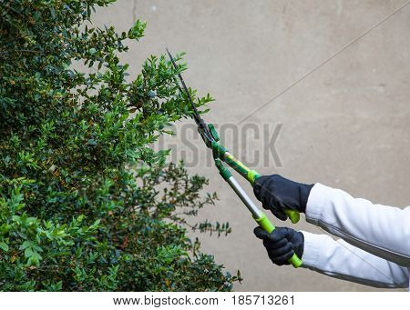 two hands cuting hedges using gardening shears