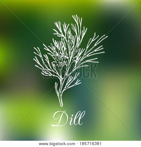 Vector dill illustration on blurred background. Hand drawn sketch of spice plant. Botanical drawing of aromatic herb. Fennel isolated.