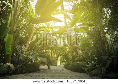 Tropical trees in botanical garden. Green forest.