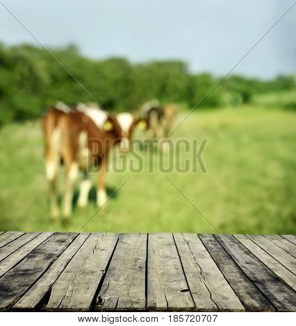 Wooden table and blurred background with green meadow and cows.