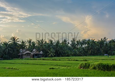 Cottage in rice fields of Ubud, Bali, Indonesia